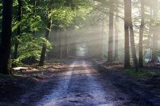 sendero-en-el-bosque