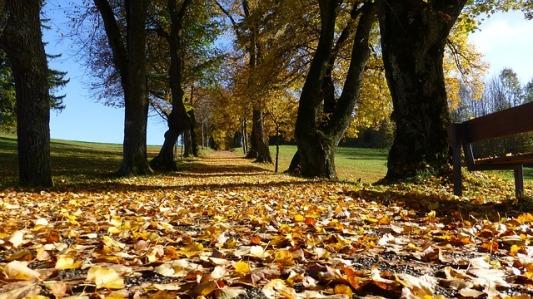 paseo otoño troncos torcidos hojas