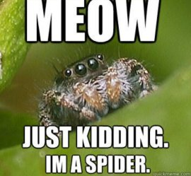 miau es broma soy una araña